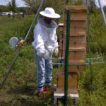 Weighing a Warre hive
