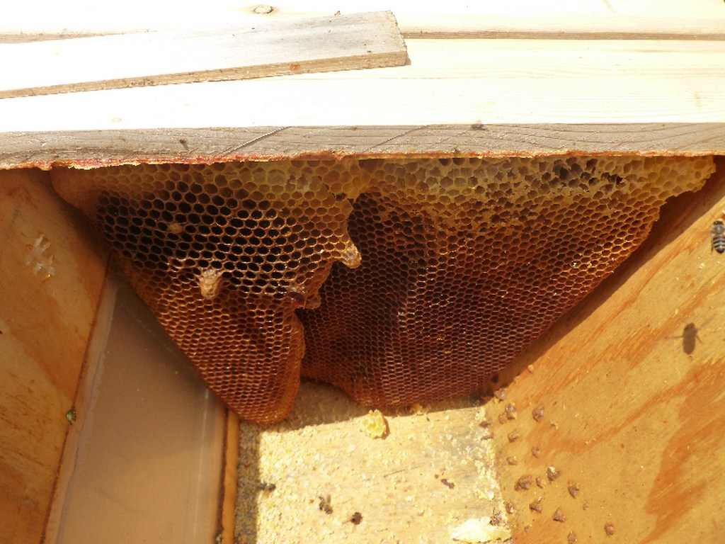 Apiaries and Hives - Central Indiana Beekeepers Association